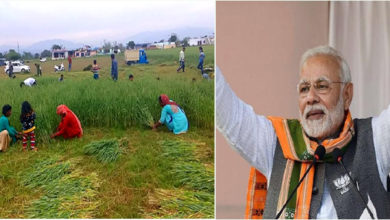 Photo of جموں: اکھنور میں پی ایم مودی کی انتخابی ریلی کے لئے کاٹی گئی کچی فصل
