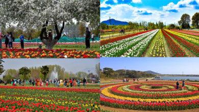 Photo of ایشیا کا سب سے بڑا باغ 'گل لالہ' سیاحوں کے لئے بند