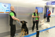 Photo of اب کتے سونگھ کر کریں گے کورونا مریضوں کی شناخت!
