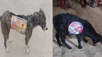 Photo of یوپی پنچایت انتخابات میں نیا 'جگل' ، کتے اور بکرے میدان میں اترے